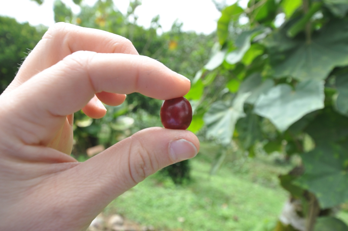 Bean Colombia.JPG