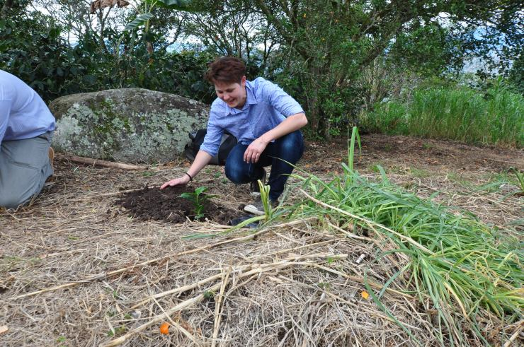 Colombia tree planting.JPG